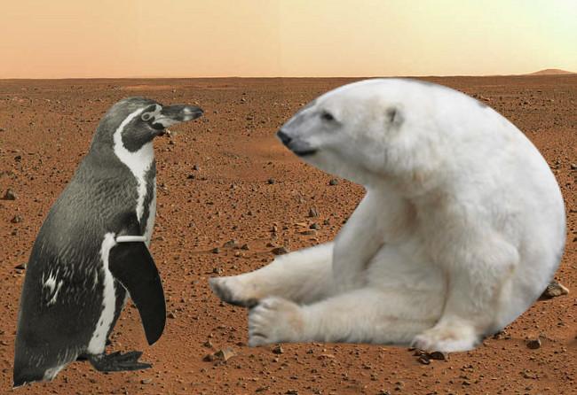 polar bear eating penguin